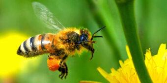 """Новинка! Терапія бджолами в гірському комлексі """"Озеро Vita"""""""