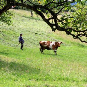 Мини-ферма 4