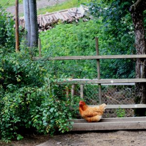 Мини-ферма 10