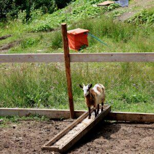 Мини-ферма 12