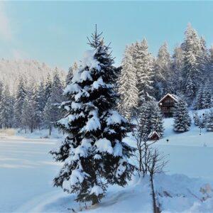 Зимние фото 16