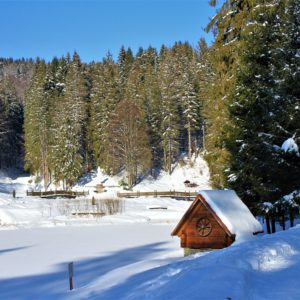 Отдых в Карпатах Зимой 33