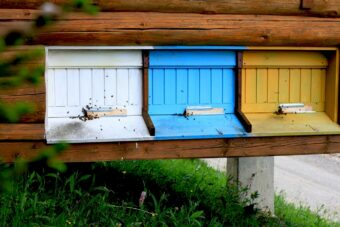 Апітерапія в Карпатах – лікування бджолиним ядом