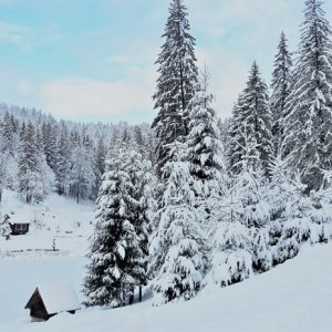 Зимняя казка — 2017 13