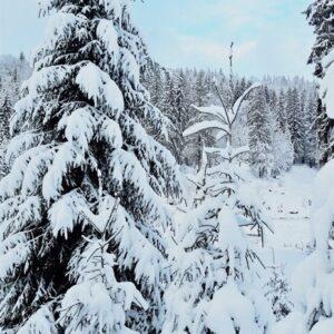 Зимняя казка — 2017 14