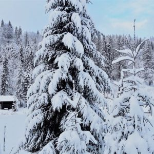 Зимняя казка — 2017 15