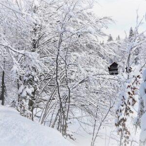 Зимові фото 14
