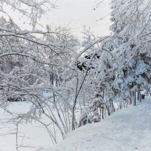 Зимові фото 13