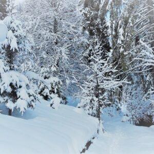 Зимові фото 10