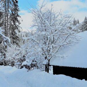 Зимові фото 9