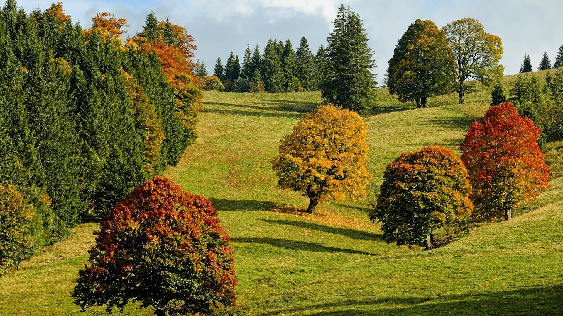 Осень в Карпатах 2021 1